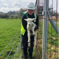 Construction man turns gamekeeper to save trapped lamb on £30 million campus